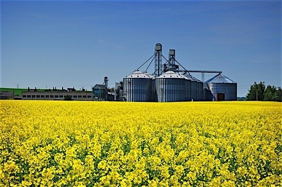 oilseed-milling-food-production-agriculture-manufacturing-statistics-canada-july-2016-ediweekly